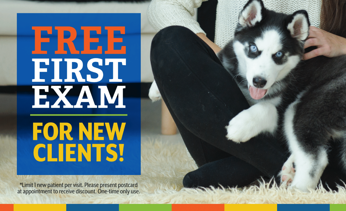 Free First Exam for New Clients